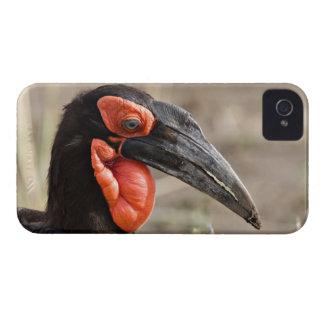 アフリカ、タンザニアの南地上のミナミジサイチョウ Case-Mate iPhone 4 ケース