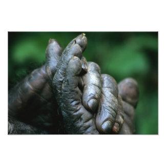 アフリカ、タンザニアのGombeの国立公園、男性 フォトプリント