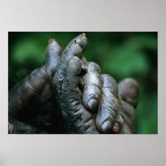 アフリカ、タンザニアのGombeの国立公園、男性 ポスター