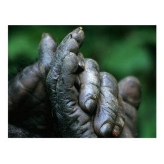 アフリカ、タンザニアのGombeの国立公園、男性 ポストカード