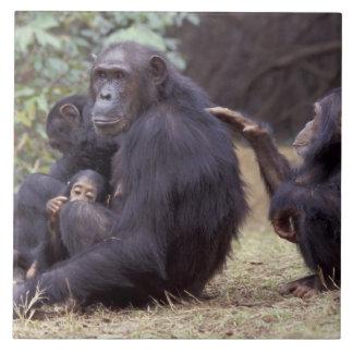 アフリカ、タンザニアのGombe NPの幼児女性 タイル