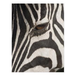 「アフリカ、タンザニアのNgorongoroの保存Area ポストカード