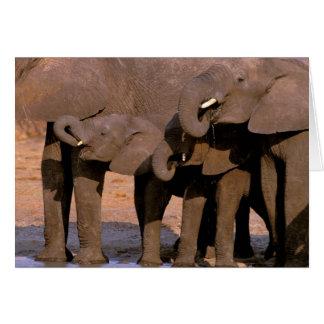 アフリカ、タンザニアのTarangireの国立公園 カード
