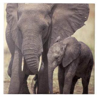 アフリカ、タンザニアのTarangireの国立公園。 2 タイル