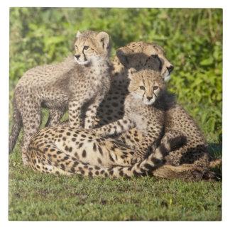アフリカ。 タンザニア。 チータの母および幼いこども タイル
