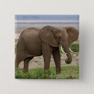 アフリカ。 タンザニア。 湖Manyara NP.の象 5.1cm 正方形バッジ