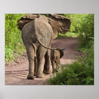 アフリカ。 タンザニア。 象の母そして子牛の ポスター