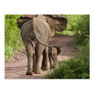 アフリカ。 タンザニア。 象の母そして子牛の ポストカード