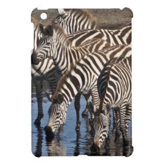 アフリカ。 タンザニア。 Ndutuで飲んでいるシマウマ iPad Miniカバー