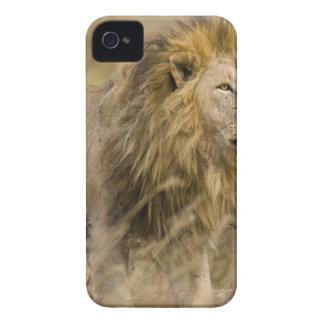 アフリカ。 タンザニア。 Ngorongoroのオスのライオン Case-Mate iPhone 4 ケース