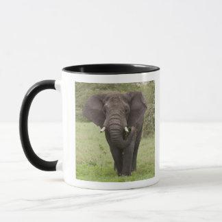 アフリカ。 タンザニア。 Ngorongoroの噴火口の象、 マグカップ