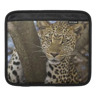 アフリカ。 タンザニア。 Serengetiの木のヒョウ iPadスリーブ
