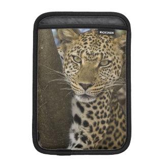 アフリカ。 タンザニア。 Serengetiの木のヒョウ iPad Miniスリーブ
