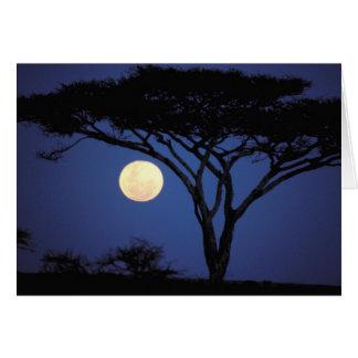 アフリカ、タンザニア、Tarangire。 アカシアの木 カード