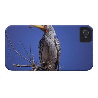 アフリカ、タンザニア、Tarangire。 黄色勘定書を出される Case-Mate iPhone 4 ケース