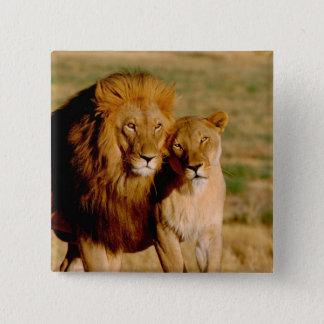 アフリカ、ナミビア、Okonjima。 ライオン及び雌ジシ 缶バッジ