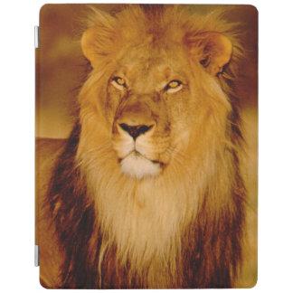 アフリカ、ナミビア、Okonjima。 単独オスのライオン iPadスマートカバー