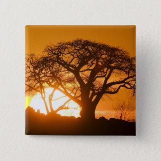 アフリカ、ボツワナの落日はBaobabのシルエットを描きます 缶バッジ