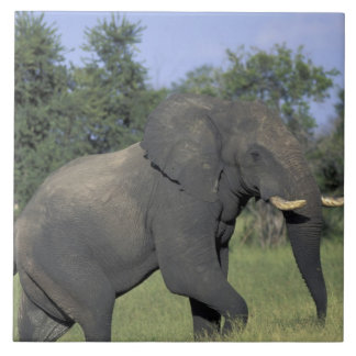 アフリカ、ボツワナのChobeの国立公園、象 タイル