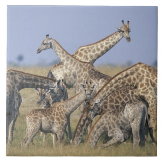 アフリカ、ボツワナのChobeの国立公園、2の群れ タイル