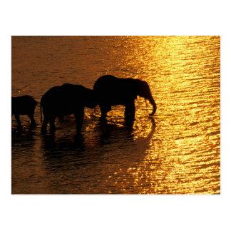 アフリカ、ボツワナのOkavangoのデルタ。 アフリカ ポストカード