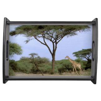 アフリカ、ボツワナのOkavangoのデルタ。 南 トレー