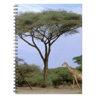 アフリカ、ボツワナのOkavangoのデルタ。 南 ノートブック