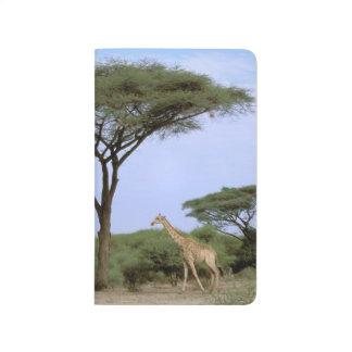 アフリカ、ボツワナのOkavangoのデルタ。 南 ポケットジャーナル