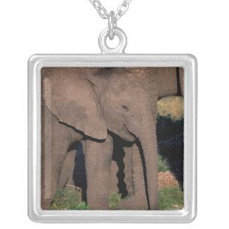 アフリカ、ボツワナのOkavangoのデルタ。 象 シルバープレートネックレス
