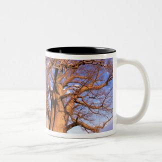 アフリカ、ボツワナのOkavangoのデルタ。 Baobab ツートーンマグカップ