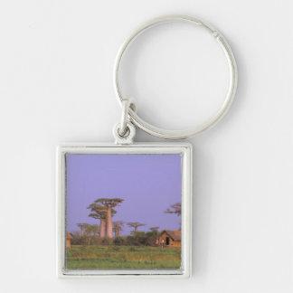 アフリカ、マダガスカル、Morondava。 Baobabs キーホルダー