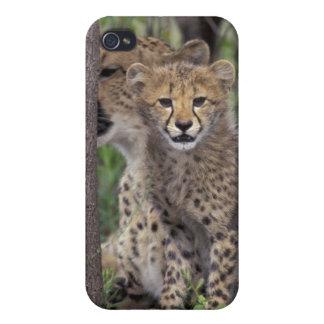 アフリカ、南アフリカ共和国のPhindaジャム。 チータ iPhone 4 Cover