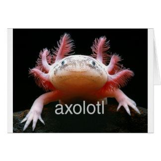 アホロートルのアホロートルのアホロートルのアホロートル カード