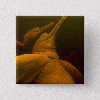 アマゾン川のイルカかBotos (Inia 2 5.1cm 正方形バッジ