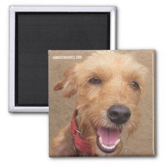 アマゾン慈悲深い社会の磁石: 大切な犬シリーズ マグネット