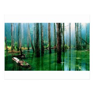 アマゾン沼地 ポストカード
