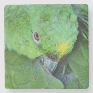 アマゾン緑のオウム ストーンコースター