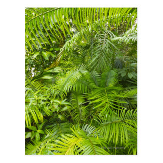 アマゾン雨林、Amazonia、ブラジル ポストカード