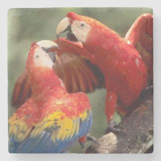 アマゾン、ブラジル。 組の深紅のコンゴウインコ(Ara ストーンコースター