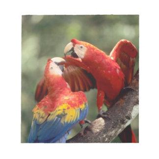 アマゾン、ブラジル。 組の深紅のコンゴウインコ(Ara ノートパッド