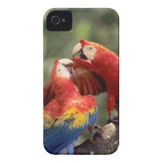 アマゾン、ブラジル。 組の深紅のコンゴウインコ(Ara Case-Mate iPhone 4 ケース