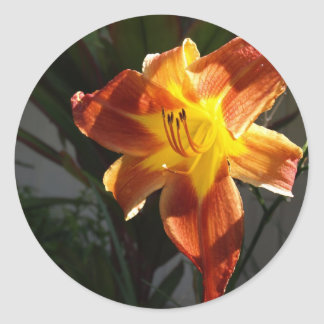 アマリリスによってはステッカーが開花します ラウンドシール
