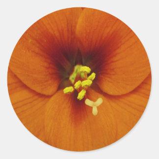 アマリリスの花のオレンジ ラウンドシール