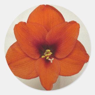 アマリリスの花の植物 ラウンドシール