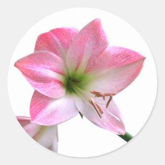 アマリリスの花 ラウンドシール