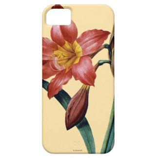 アマリリス iPhone SE/5/5s ケース