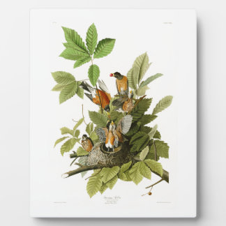 アメリカのアメリカ人のロビンジョン・ジェームズ・オーデュボンの鳥 フォトプラーク