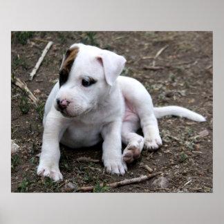 アメリカのピットブルテリアの小犬 ポスター