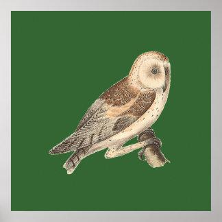 アメリカのメンフクロウ(溝彫りのpratincola) 1 ポスター