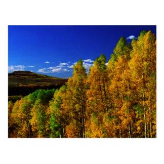 アメリカの木の秋季の自然の写真撮影 ポストカード